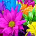 Gift Summer Flowers To Near And Dear Ones Through Florist Inverurie